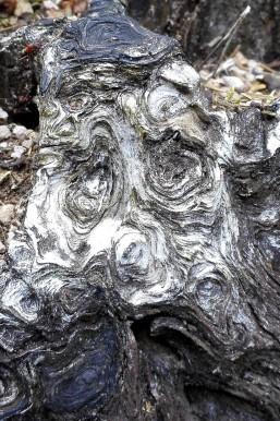 Kunst Fotografie Holz Natur