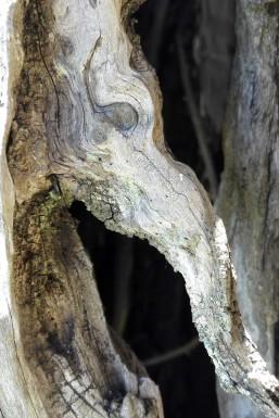 Olivenbaum Fotos